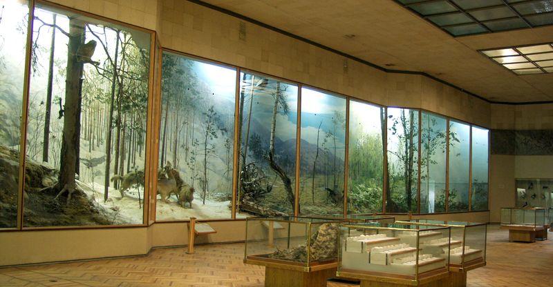 Животный музей ильменского заповедника