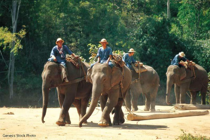 Тайланд - фестиваль слонов