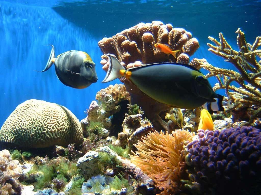 Цены на экскурсии в Египте. Коралловые острова