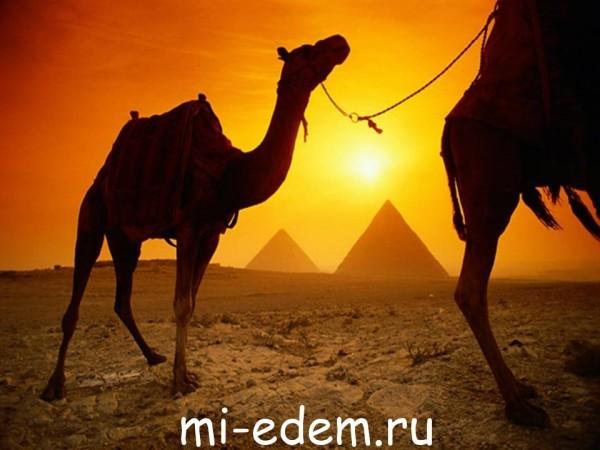 В Египет бесплатно