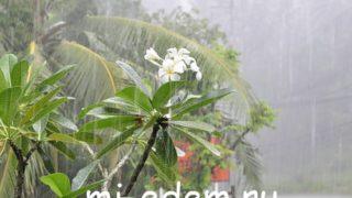 Погода в Тайланде в июне