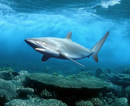 Есть ли акулы в Тайланде