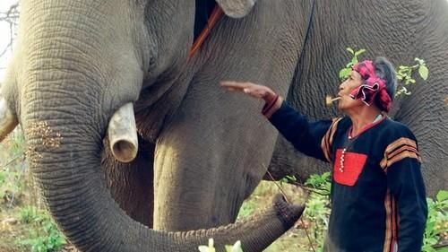 Экскурсии во Вьетнаме (Даклак)
