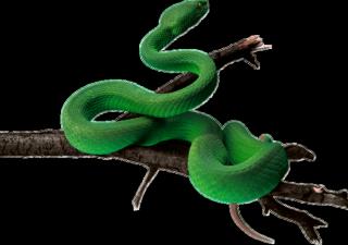 Змеиная ферма во Вьетнаме
