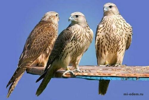 Птицы Египта