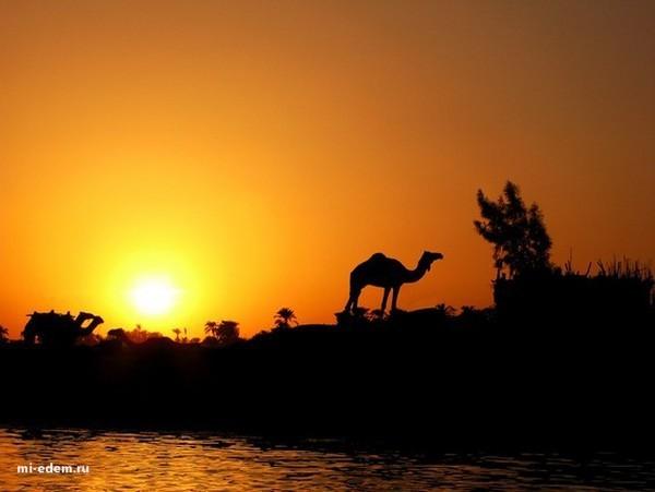 Рельеф Египта