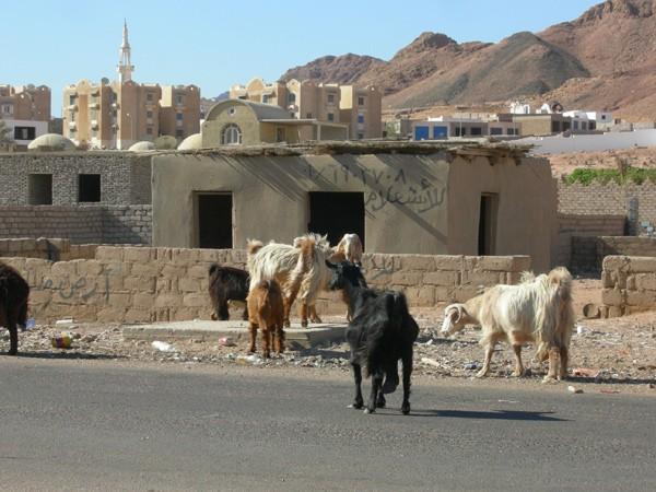 Дахаб Египет